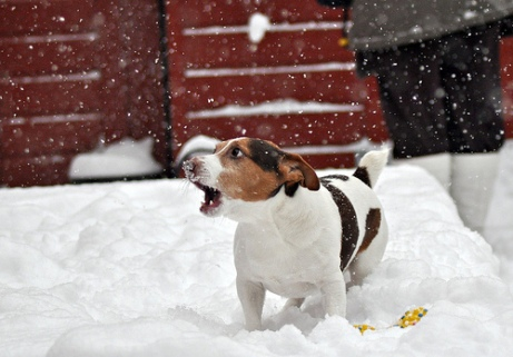 Dog n Snow